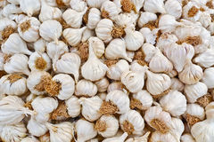 Lampadine dell'aglio Fotografie Stock