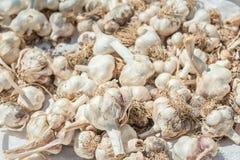 Lampadine dell'aglio che si asciugano al sole immagine stock