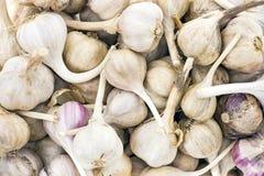 Lampadine dell'aglio e chiodi di garofano di aglio Immagini Stock