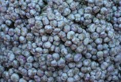 Lampadine dell'aglio su esposizione da vendere Fotografia Stock