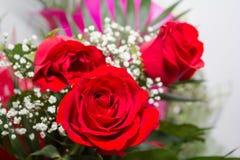 Lampadine delle rose Fotografia Stock