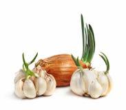 Lampadine di aglio e della cipolla Immagini Stock