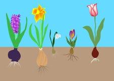 Lampadine di fiore illustrazione vettoriale