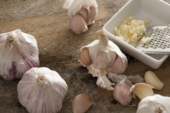 Lampadine e grattugia fresche dell'aglio Immagini Stock Libere da Diritti