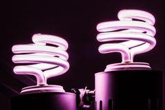 Lampadine economizzarici d'energia Fotografia Stock Libera da Diritti
