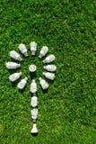 Lampadine economizzarici d'energia su erba verde fotografia stock