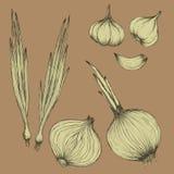 Lampadine ed aglio delle cipolle nel bianco sul vettore beige del fondo Fotografia Stock Libera da Diritti