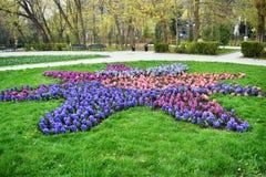 Lampadine porpora, bianche e rosa della molla in anticipo fresca del giacinto, sviluppate nei fowerbeds del giardino del parco de fotografie stock