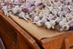 Lampadine porpora dell'aglio da vendere sulla tavola al mercato dell'agricoltore Fotografia Stock