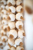 Lampadine secche dell'aglio Immagini Stock Libere da Diritti