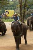 LAMPANG,泰国- 2018年12月7日:游人泰国,Mahout 免版税库存图片