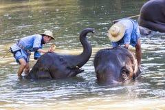 Lampang la Tailandia 24 dicembre 2018 - bagno dell'elefante del bagno dell'elefante di attività naturalmente fotografia stock