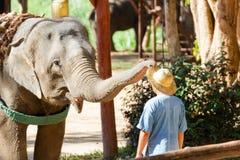 LAMPANG, Mahouts della TAILANDIA mostrano come preparare un elefante, preparano gli elefanti per portare un cappello per gli uomi immagine stock libera da diritti