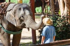LAMPANG, TAILANDIA - 24 dicembre 2018: - il centro tailandese TECC, Mahouts di conservazione dell'elefante mostra come preparare  immagini stock libere da diritti