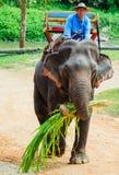 Lampang, Tailandia - 26 novembre 2017: Mahout e giro turistico o fotografia stock