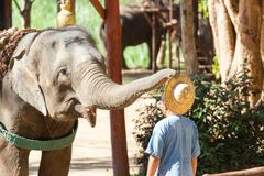 The Thai Elephant Conservation Center TECC, Mahouts show how to train an elephant. LAMPANG, THAILAND - Dec 24, 2018:- The Thai Elephant Conservation Center TECC royalty free stock photos