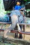 Lampang, Thailand - November 26, 2017: Mahout and tourist ride o Royalty Free Stock Image