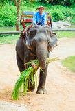Lampang, Thailand - 26. November 2017: Mahout und touristische Fahrt O lizenzfreies stockbild