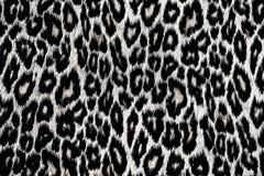 Lampart, jaguar, ryś skóra Zdjęcie Royalty Free