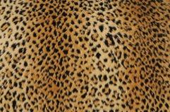 lampart skóra Zdjęcie Stock