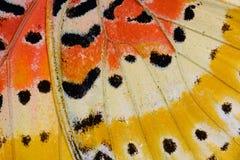 Lamparta Lacewing motyl (Cethosia cyane) Fotografia Royalty Free