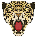 Lamparta portret Gniewny dziki duży kot Zdjęcie Stock