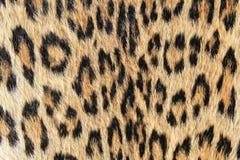 Lamparta tło skóra i punkty - Afrykański drapieżnik Obrazy Royalty Free