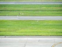 Lampasy taxiway i zielona trawa przy lotniskiem Obraz Royalty Free