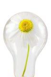 Lampe écologique Photos stock