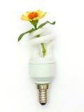 Lampe économiseuse d'énergie Photo libre de droits
