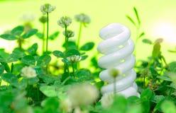 Lampe économiseuse d'énergie dans l'herbe verte Images libres de droits