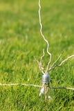 Lampe auf dem grünen Gras Lizenzfreies Stockbild