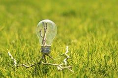 Lampe auf dem grünen Gras Lizenzfreie Stockbilder
