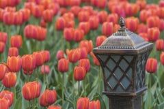 Lampe avec des tulipes Photos stock