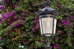 Lampe avec la bouganvillée Photo stock