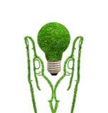Lampe d'herbe verte dans des mains photo libre de droits
