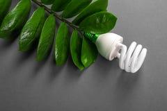 Lampe de LED avec la feuille verte, concept d'énergie d'ECO, fin  Ampoule sur le fond gris S'enregistrer et environnement écologi Photos stock