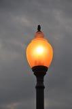 Lampe an der Dämmerung lizenzfreies stockbild