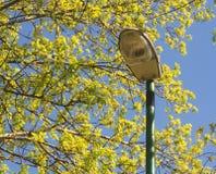 Lampe et arbre Image stock