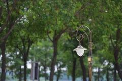 Lampe et arbre de route Images stock