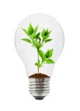 Lampe et centrale Photos stock