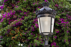 Lampe mit Bouganvilla Stockfoto
