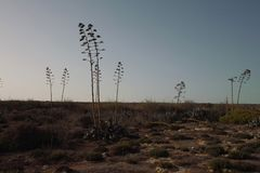 Lampedusa Country landscape royalty free stock photos
