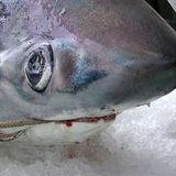 Shark head detail. Lampedusa, Italy - September 02, 2002: Shark sold in a market royalty free stock images