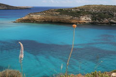 Lampedusa (Sicily) - Rabbits island royalty free stock photo