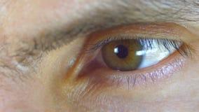 Lampeggiamento maschio dell'occhio umano del macro primo piano stock footage