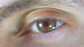 Lampeggiamento maschio dell'occhio umano del macro primo piano archivi video