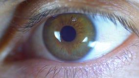 Lampeggiamento maschio dell'occhio umano del macro primo piano Movimento lento archivi video