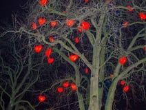 Lampes en forme de coeur accrochant sur un arbre Photos libres de droits