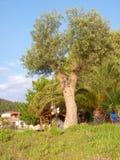 Lampes sur un arbre Images libres de droits